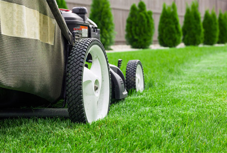Property Maintenance in Sutherland Shire